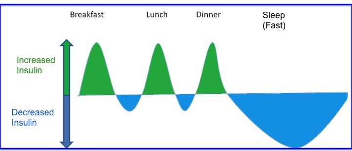 Meal Timing & Insulin sensitivity/Insulin Resistance (IR)  (1/2)